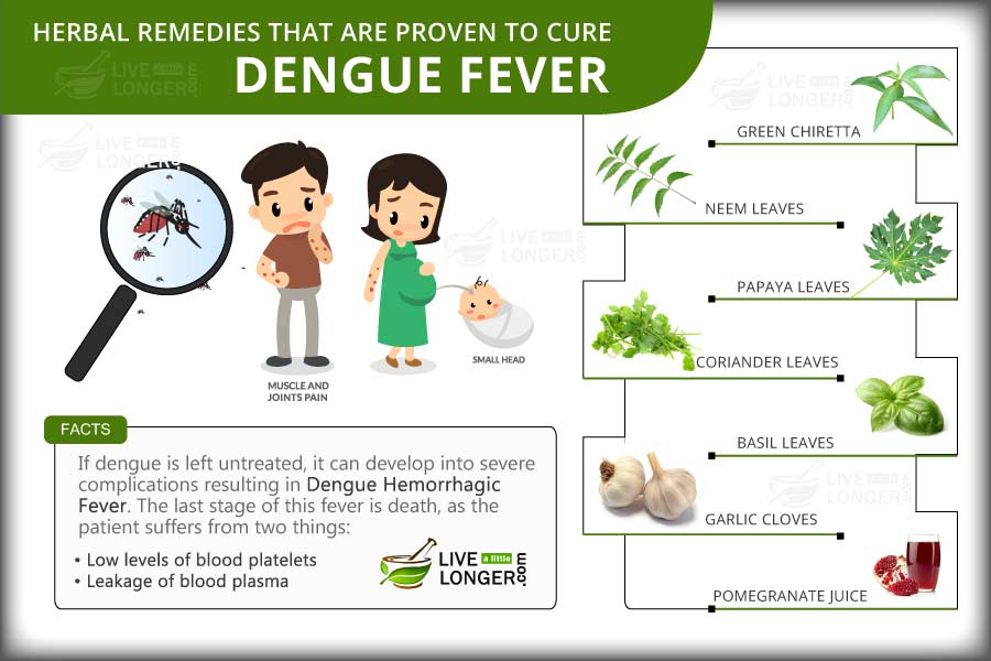 an essay on dengue fever Essay on dengue fever in subtropical and  dengue fever, also called dengue  dengue fever (breakbone fever) is a disease transmitted by a mosquito bite read about dengue treatment and symptoms, like rash and high fever, get vaccine information, and learn about the latest outbreak.