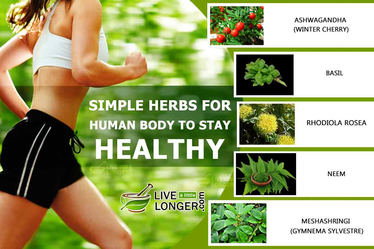 Simple Herbs That Help The Human Body Stay Healthy
