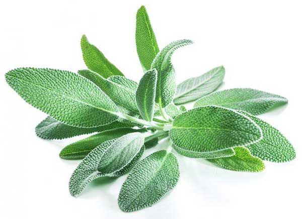 life saving remedy sage