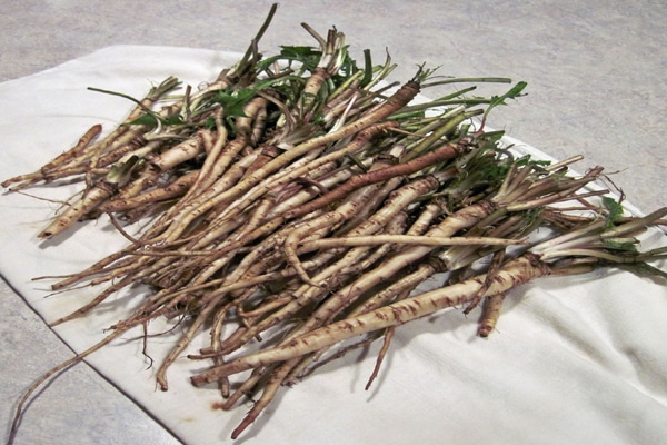 wonder herb for diabetics and old age persons