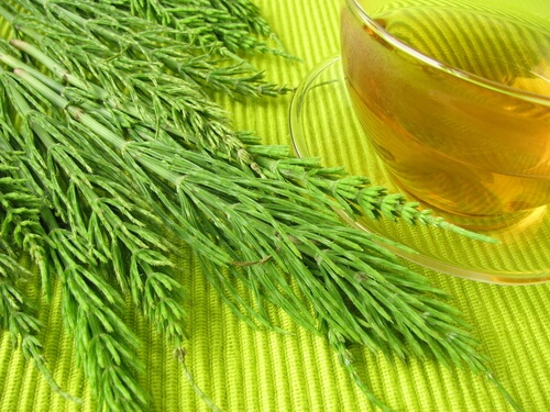 10 Amazing Herbs To Make Your Hair Grow Faster5