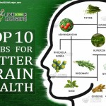 Top 10 herbs for best brain health
