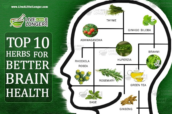 Herbs To Boost Your Brain To Be Healthy