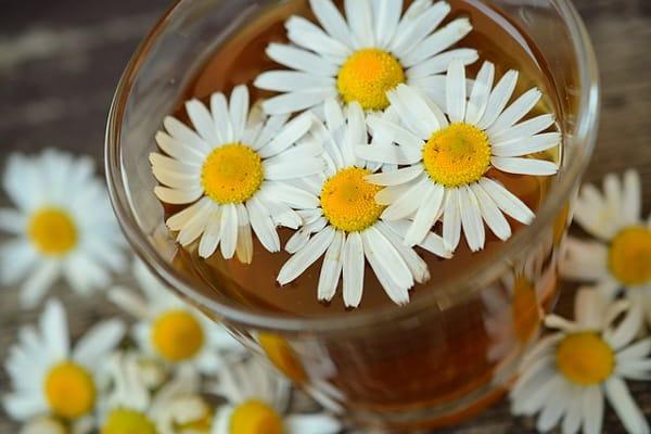 herbal remedies for psoriasis
