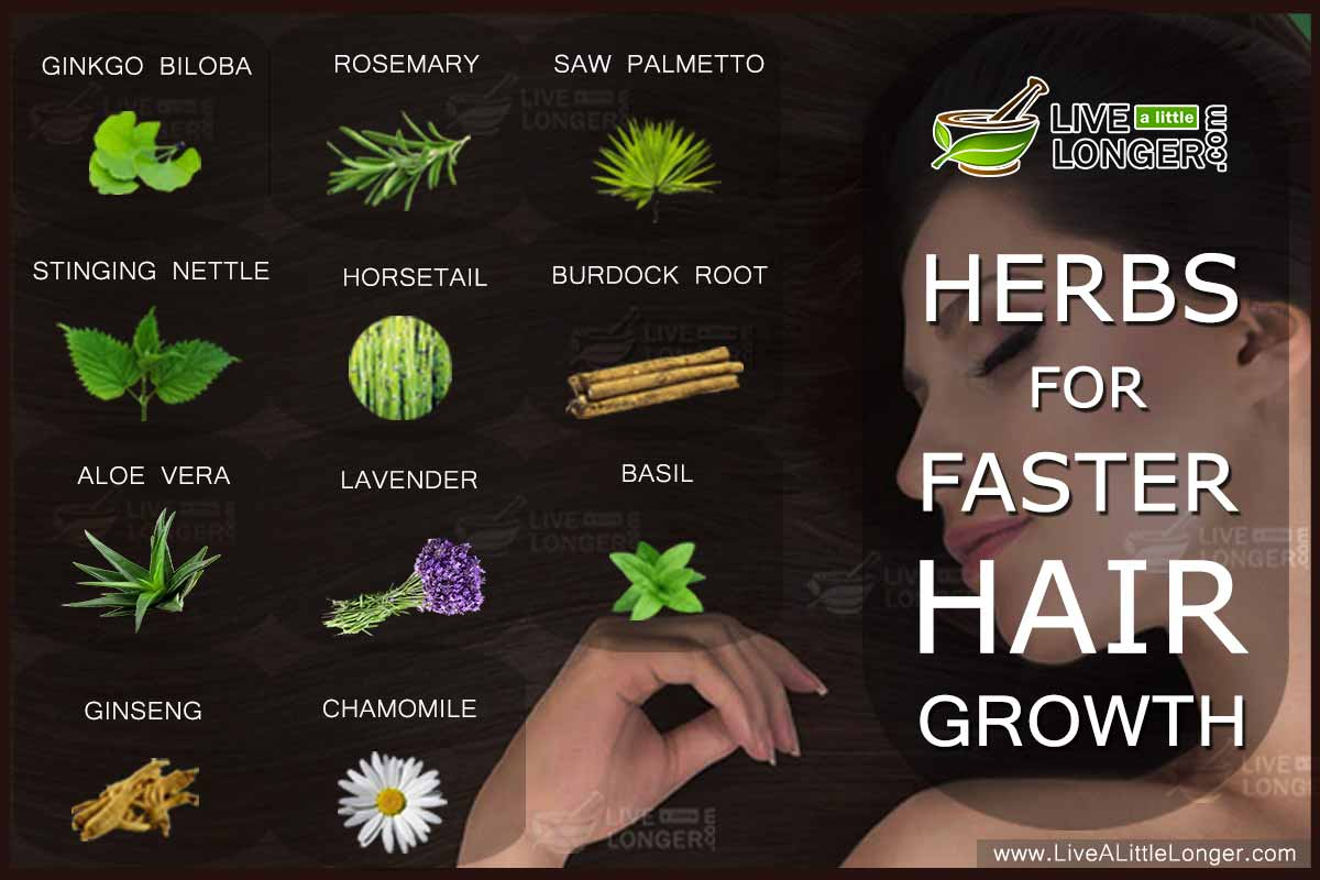 herbs help hair grow