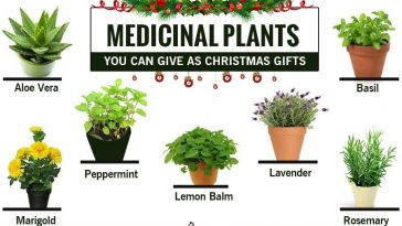 medicinal-plant-as-christmas-gifts-67