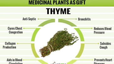 medicinal-plant-as-gift-thyme