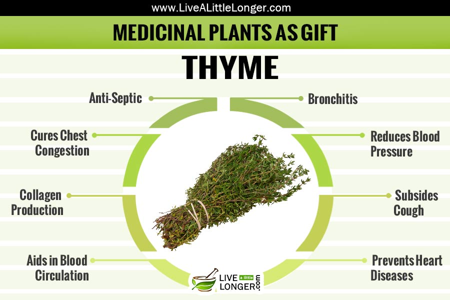 thesis about medicinal plants You should send master's thesis, doctoral thesis/ dissertation as pdf file attachment to photonjournal@yahoocom h ow much time it will take to get my thesis/ dissertations on medicinal plants published.