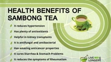 Health Benefits Of Sambong Tea