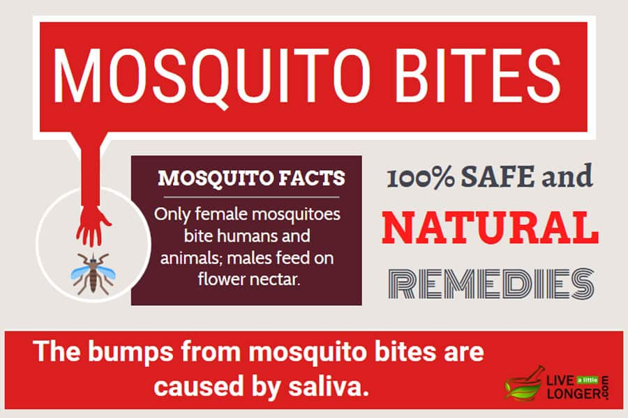 5 Exceptional Home Remedies For Mosquito Bites