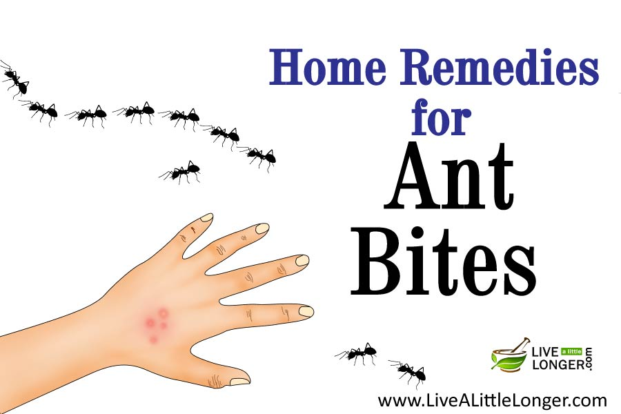 Natural Remedies For Ant Bites On Dogs