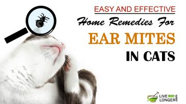 Home Remedies For Ear Mites In Cats