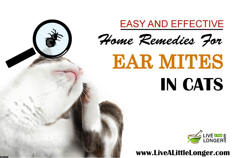 Home Treatments for Ear Mites Revolution. This once a month topical that's applied between the cat's shoulder blades helps cats get rid of worms, fleas, ticks and ear mites.