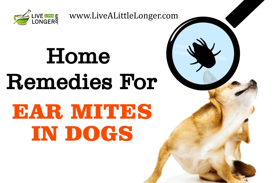 home remedies for ear mites in dogs