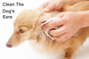 how-to-clean-the-dogs-ears