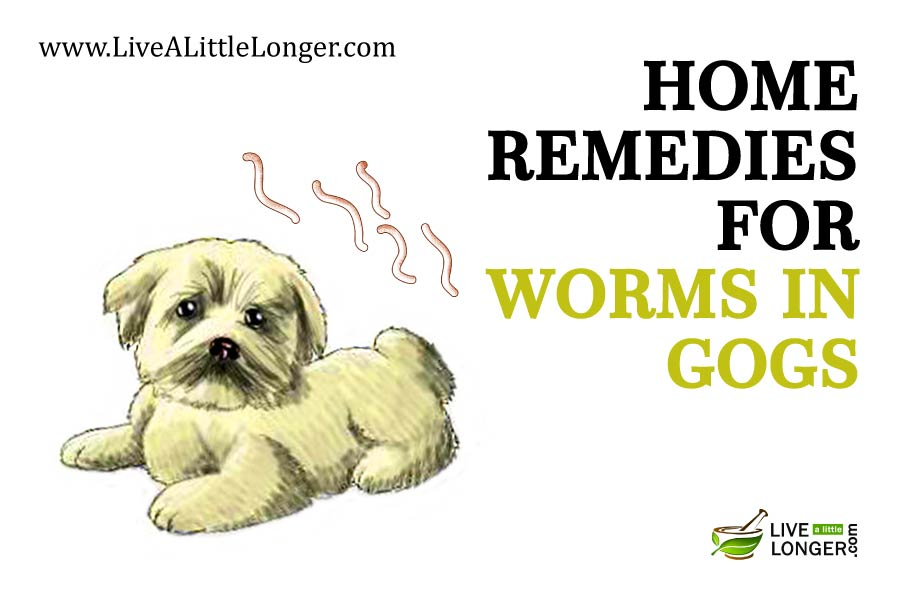 Tapeworm Treatment Dogs Home Remedies