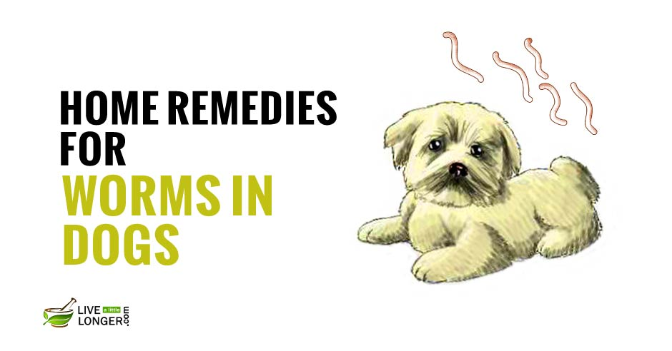 Natural Home Remedies For Tapeworms In Dogs