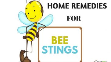 Natural Remedies For Bee Stings In Dogs