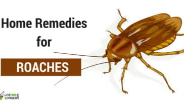 Home Remedies for Roaches In The House