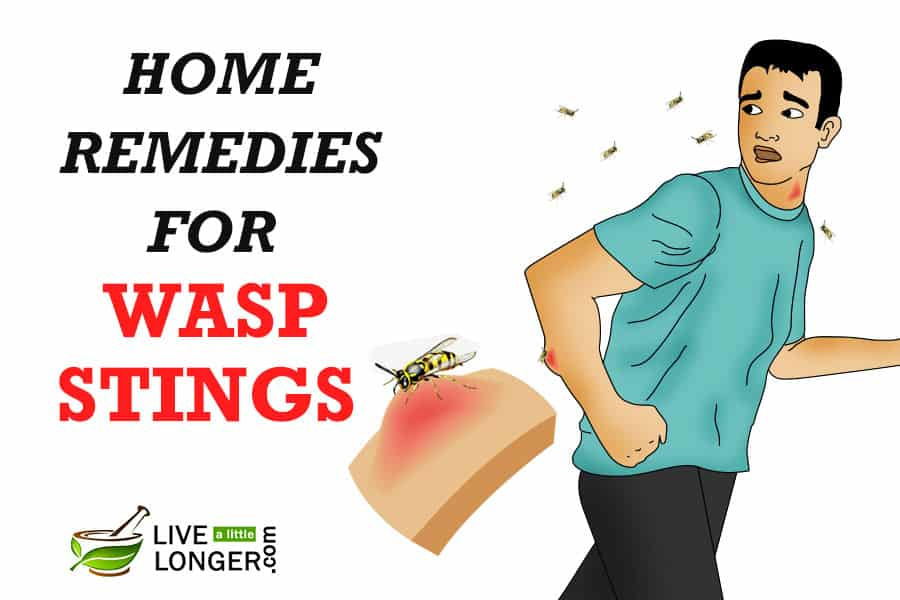 Surprising 8 Best Home Remedies For Wasp Stings Interior Design Ideas Tzicisoteloinfo