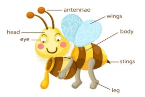 what is a bee sting