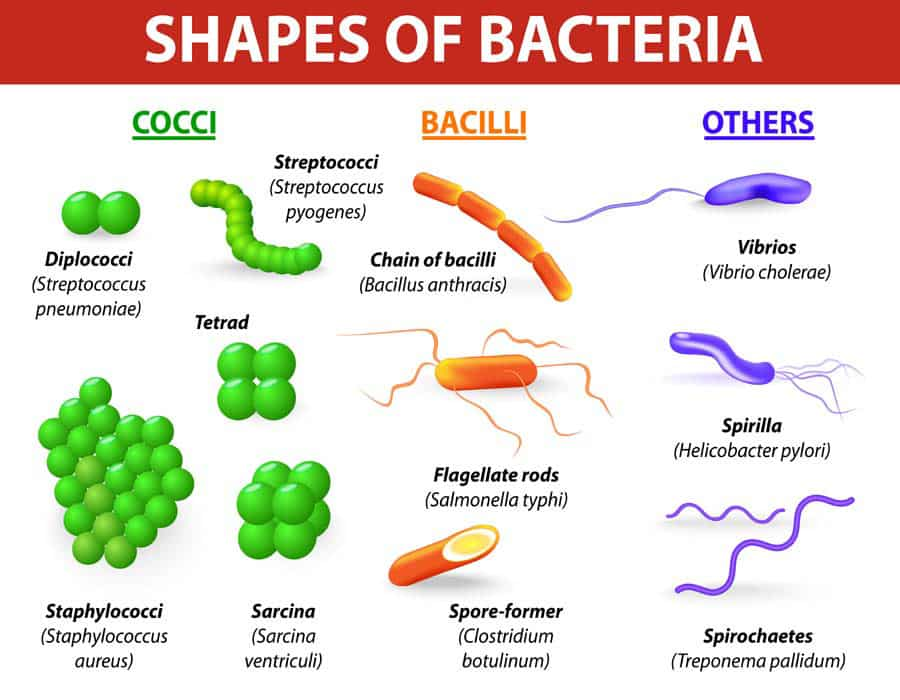 types of bacteria and virus