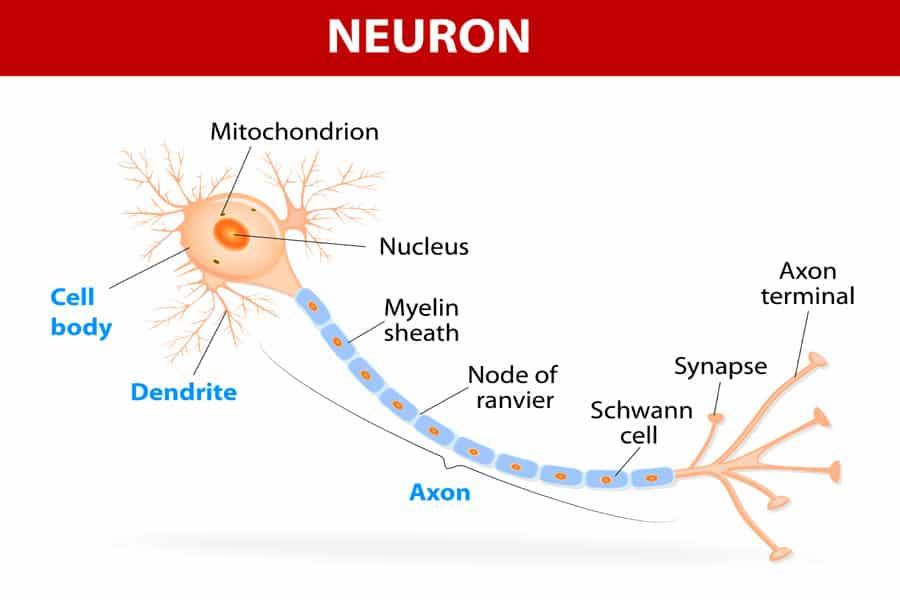 Do Not Ignore Nerve Pain - Arrowhead Health Centers