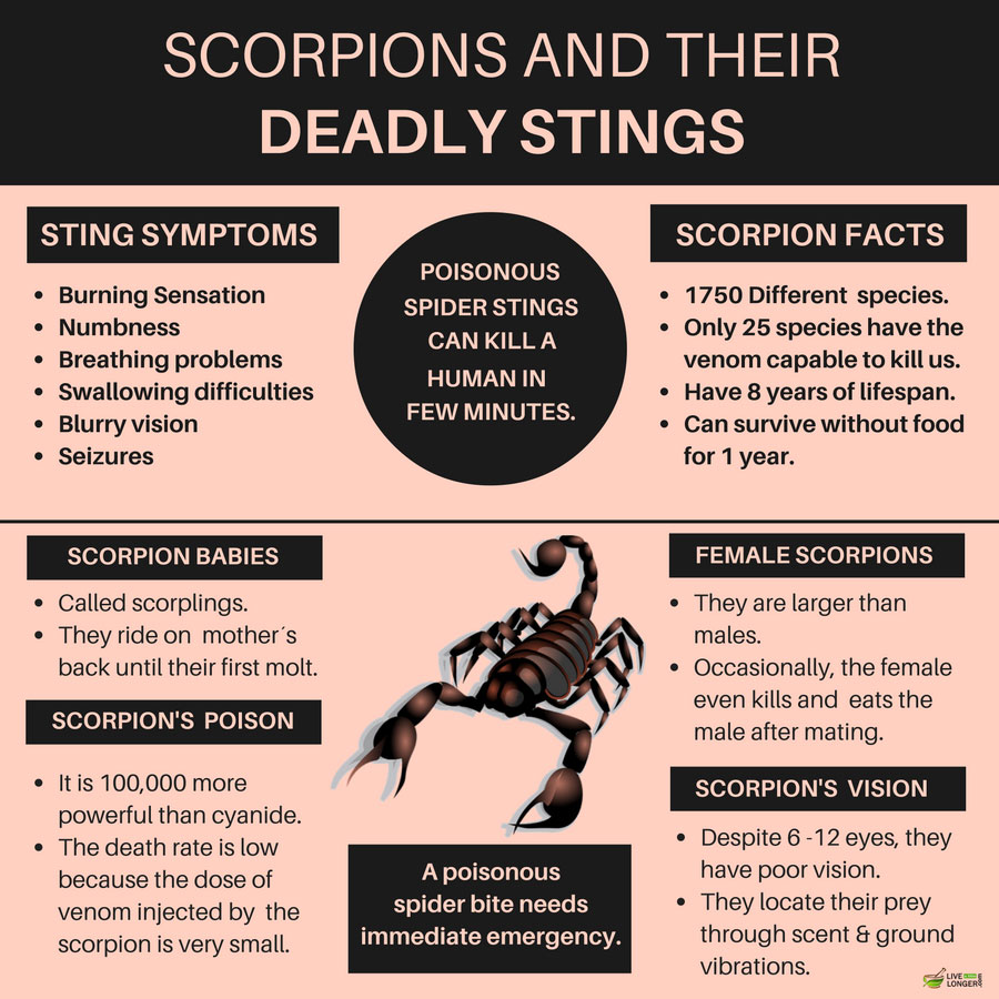 natural remedies for scorpion stings