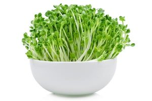 Alfalfa herb for anorexia