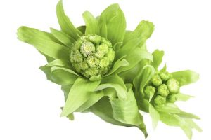 Butterbur herbs for migraine