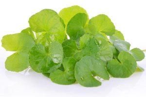 herb Centella Asiatica