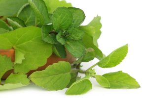 herbs for breat milk production