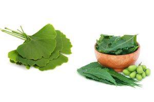 natural herbs for long hair