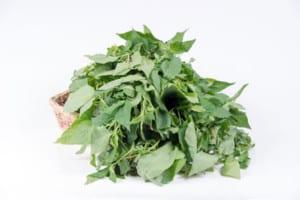 Solanium Nigrum herb
