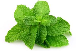 natural treatment for mint leaves