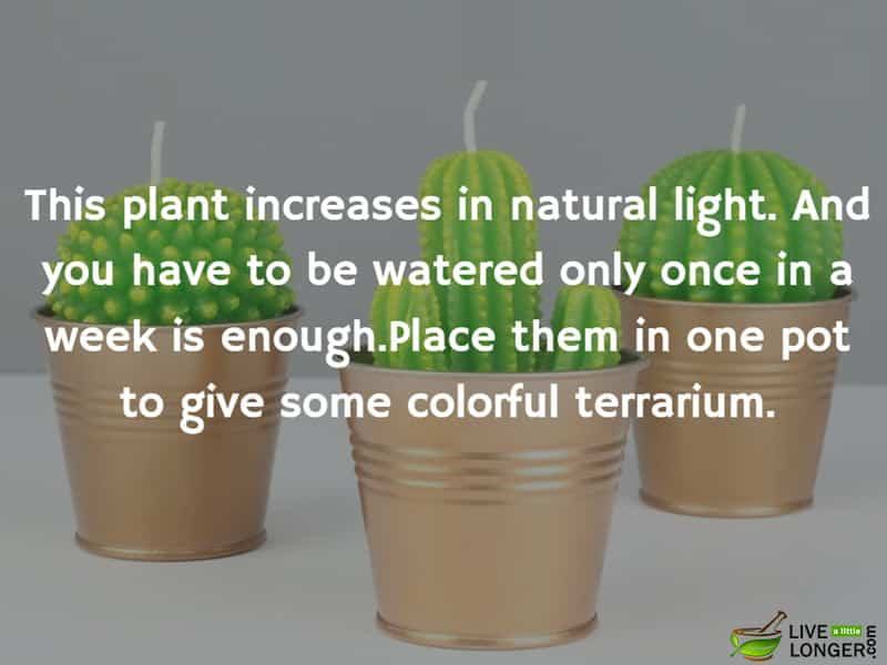 The best indoor Plants-3