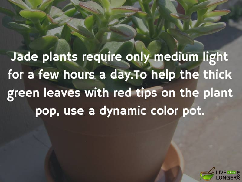 The best indoor Plants-5