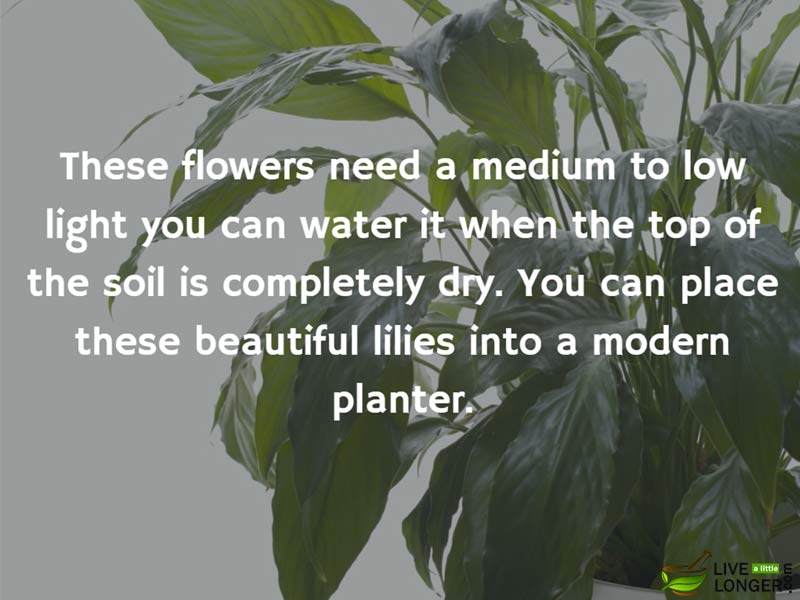 The best indoor Plants-6