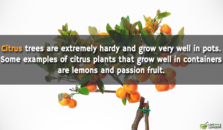 Citrus-Can-Grown-At-Home