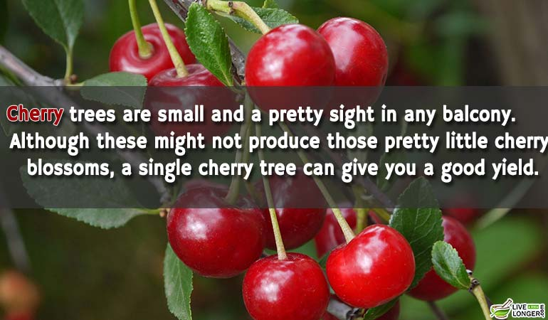 cherries-Can-Grown-At-Home