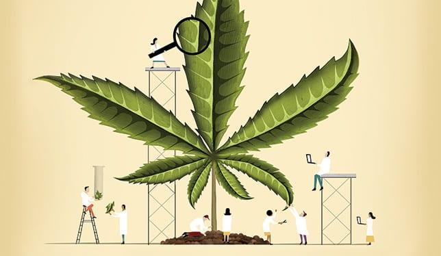 Health Benefit Of Cannabis Oils