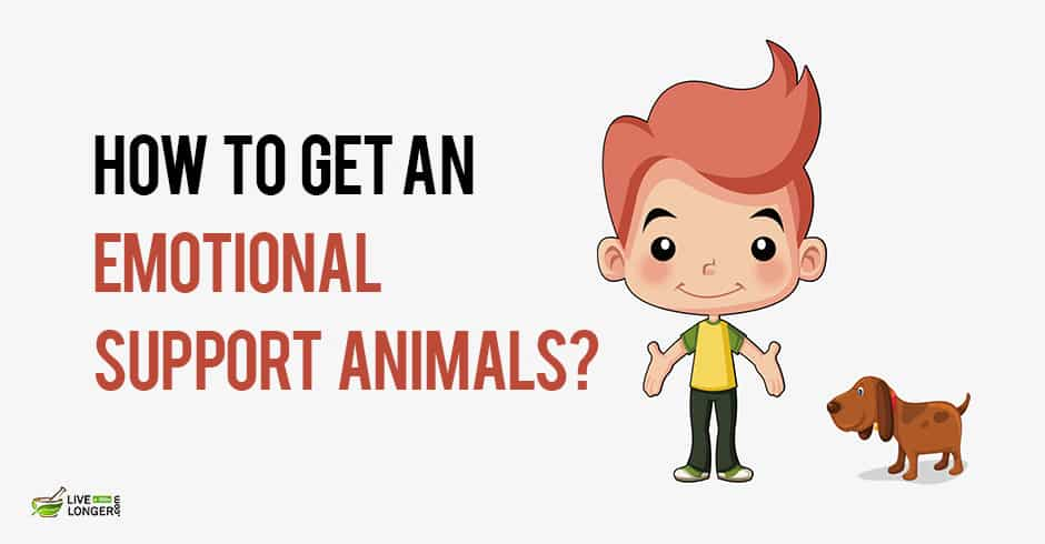 How to get a emotional support animals for your mental health for How to get an esa letter from your doctor