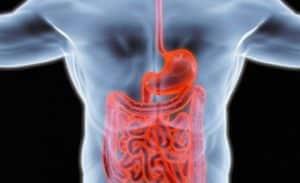 prendre le contrôle de la santé digestive &quot;width =&quot; 300 &quot;height = &quot;183&quot; données-jpibfi-description = &quot;&quot; données-jpibfi-post-excerpt = &quot;&quot; données-jpibfi-post-url = &quot;https://www.livealittlelonger.com/7-simple-ways-to-take- contrôle-de-votre-santé digestive-santé / &quot;data-jpibfi-post-title =&quot; 7 façons simples de prendre le contrôle de votre santé digestive &quot;data-jpibfi-src =&quot; https://www.livealittlelonger.com/wp- content / uploads / 2018/06 / take-control-of-digestive-health1w-300x183.jpg &quot;/&gt;</p><p>Le système nerveux entérique est notre deuxième cerveau, il est étroitement lié à notre cerveau et fonctionne en harmonie avec elle, en même temps participer à la régulation du système hormonal.Si une interférence ou un dysfonctionnement survient dans cette connexion en douceur, il finira par des troubles de santé graves.Le traitement de nombreux problèmes de peau commence par vérifier t la santé intestinale puisque des symptômes tels que l&#39;irritation, l&#39;acné, la sécheresse, l&#39;onctuosité et la rougeur se réfèrent souvent à l&#39;élimination inappropriée des toxines dans le tractus intestinal et aux troubles hormonaux connexes</p><p>Globalement, notre santé intestinale affecte directement notre corps entier santé. Par conséquent, pour prévenir certaines complications plus graves, il est préférable de commencer à prendre soin de votre santé intestinale aujourd&#39;hui.</p><h2> <strong>Comment faire fonctionner votre intestin comme un charme</strong></h2><h3><strong>1. Prenez le contrôle de votre alimentation</strong></h3><p>Nous sommes ce que nous mangeons et c&#39;est totalement vrai. Ainsi, la première étape vers votre intestin qui fonctionne bien est de reconsidérer votre ration et votre menu pour élaborer de saines habitudes alimentaires et changer complètement votre façon de manger. Reconstituez votre menu avec des aliments plus sains et non transformés riches en fibres. Les fibres na