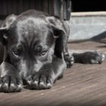 Natural remedies for unwell dogs